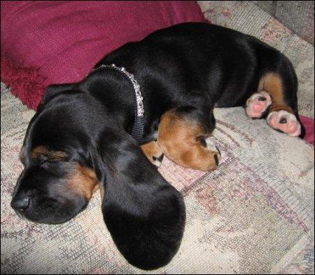 Puppy Power Naps