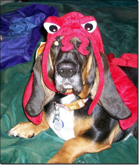 basset-lobster