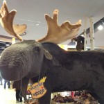 Murray the Moose - Lake Erie Loop 2013