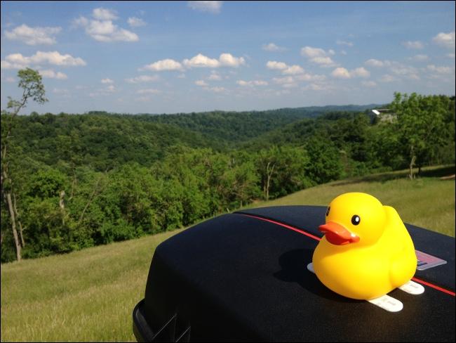 Hi-Viz Safety Duck